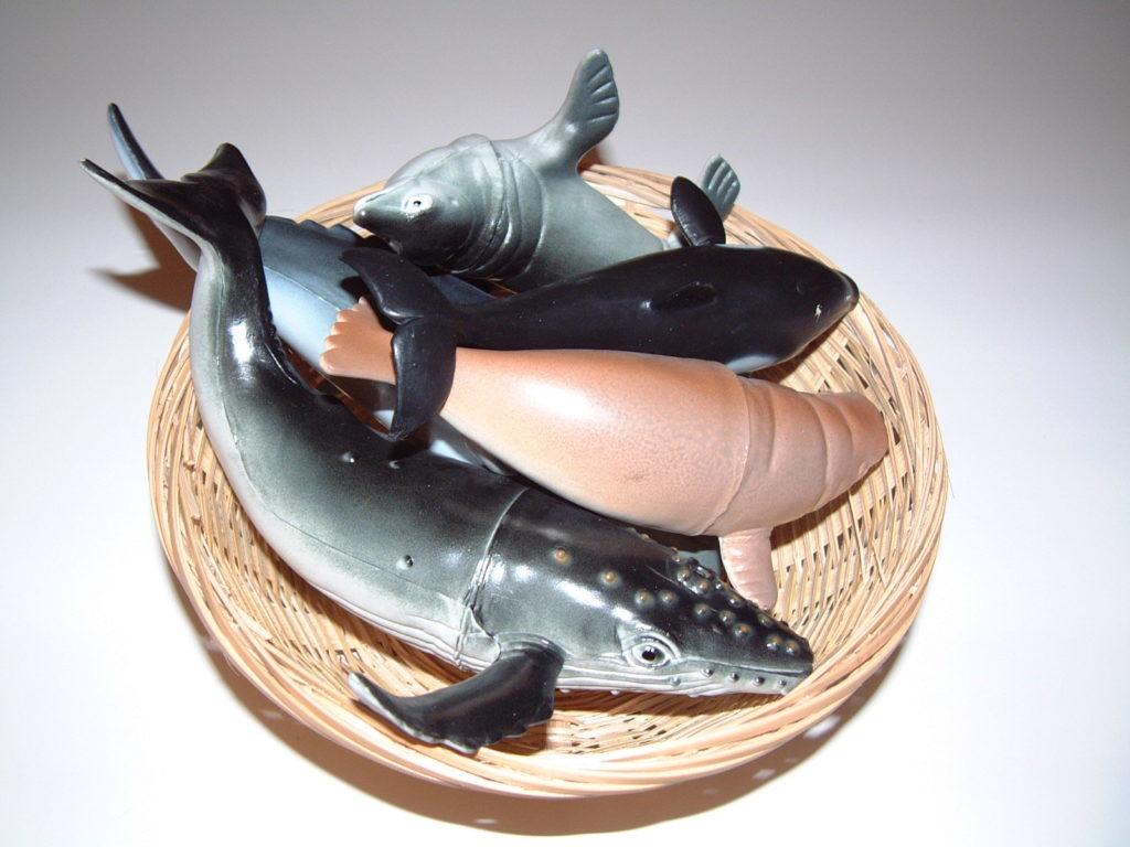 SC8 Sea Animals