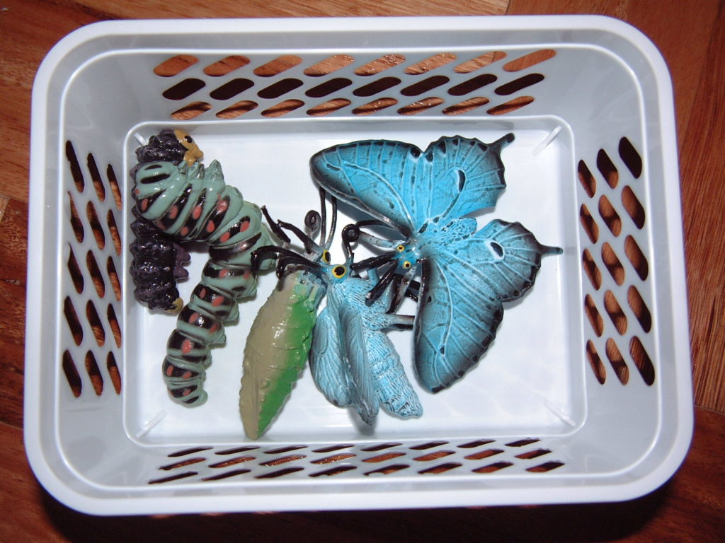 SC10 Butterfly life cycle